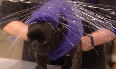 Porcupine Dog Costume