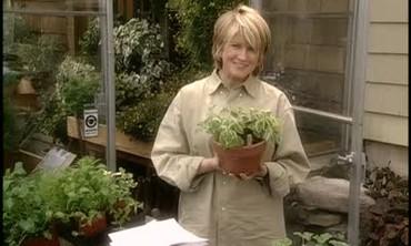 Ask Martha: Herbs