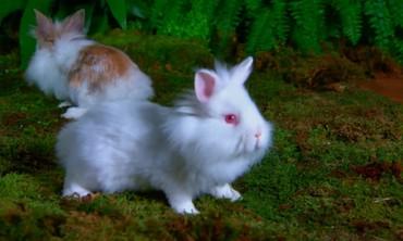 Bunny Glossary
