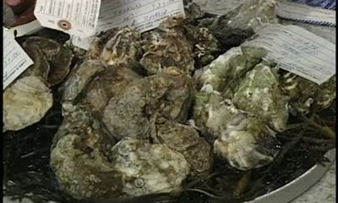 Regional Oysters