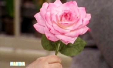 Paper Roses, Pt. 1
