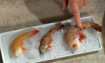 Shrimp Glossary