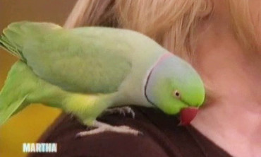 Talented Parakeet