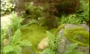 How to Care for Moss