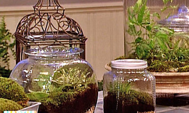 Make Terrariums, Pt. 2
