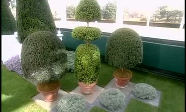 Topiary Plants, Part 1