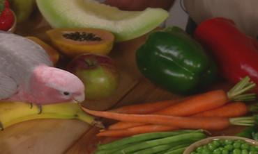 Pet Fruits and Veggies