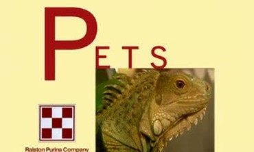 Caring for Pet Iguanas