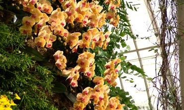New York Orchid Show