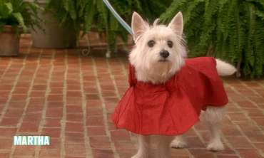 Outerwear Fashions for Dogs