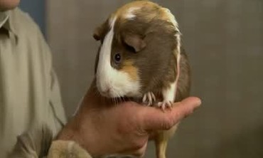 Pet Rodent Maintenance