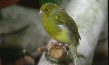 Bird Seed for Wild Birds