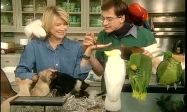 Exotic Invertebrate Pets