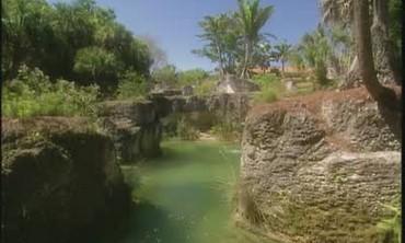 Tropical Garden Paradise