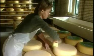 Holland Dairy Farm, Part 2