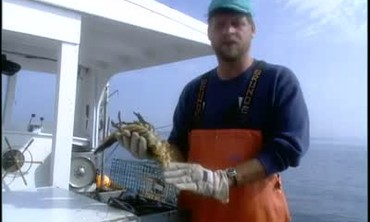 Lobster Trapping in Maine