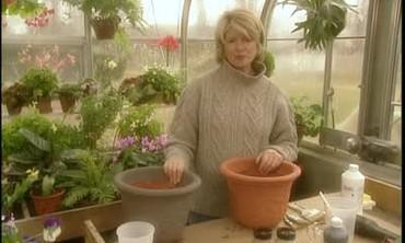Video How To Naturally Age Terra Cotta Pots Martha Stewart
