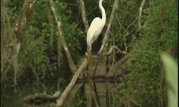 Florida's Big Cypress Swamp