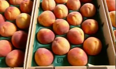 Frog Hollow Peach Orchards