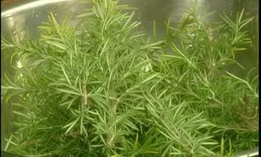 Good Thing: Rosemary Plants