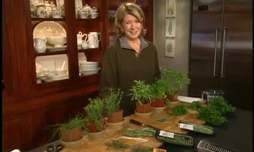 How to Prepare Fresh Herbs
