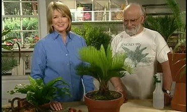 How to Repot a Cycad Plant