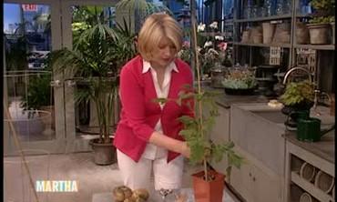 Vegetable Garden Seedlings
