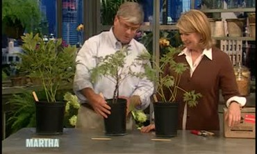 How to Plant Peonies, Part 1