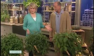 Hydrangeas with Dan Hinkley