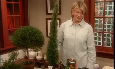 Maintaining Potted Rosemary