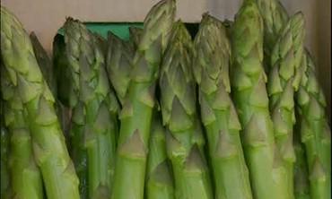 Spring Asparagus Harvesting