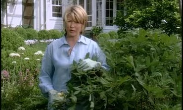 How to Care for Tree Peonies