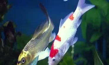 Keeping a Saltwater Aquarium