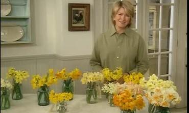 Varieties of Daffodil, Part 2