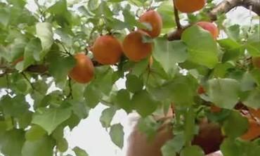 Visit to a Hybrid Fruit Farm
