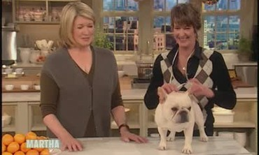 Westminster Dog Show Winners