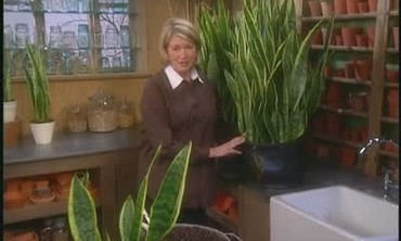 Dividing and Repotting Plants