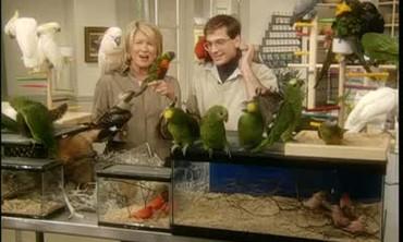 Feeding Parrots and Pet Birds