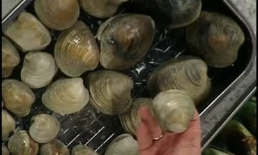 Shellfish: Clams, Mussels, Crabs