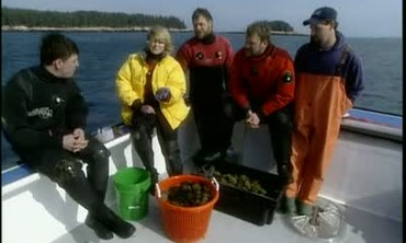 Diving for Sea Urchin in Maine