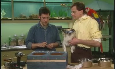 How to Build a Dog Bowl Holder