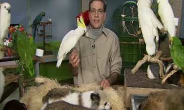 Marc's Final Tips on Bird Cages