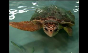 The Marine Animals of Atlantis