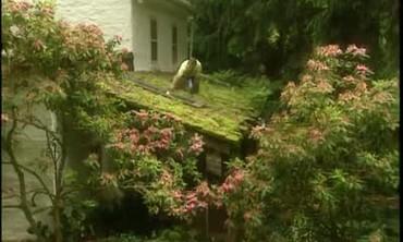 David Culp's Pennsylvania Garden
