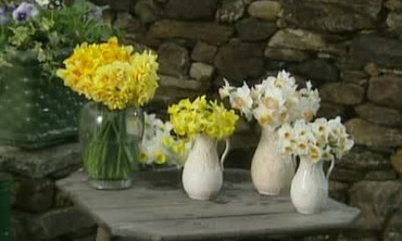 How to Arrange Spring Daffodils