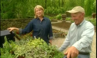 How to Plant Herbs in a Pattern