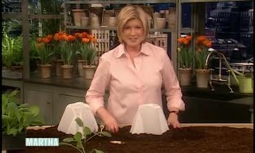 How to Prepare Spring Seedlings