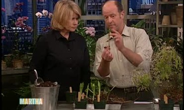How to Propagate Chinese Plants