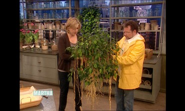 Martha's Prized Spaghetti Tree