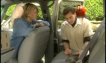 Traveling With Pets in Vehicles